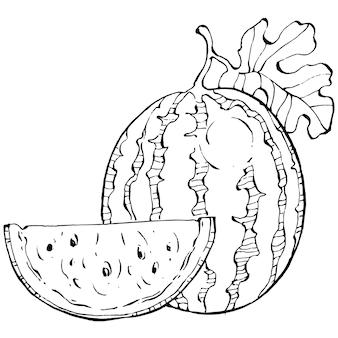 Dessin vectoriel de croquis de pastèque baies dessinées à la main isolées sur fond blanc baies d'été