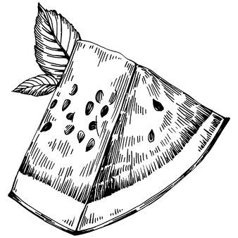 Dessin vectoriel de croquis de pastèque. baies dessinées à la main isolées sur fond blanc. illustration de style gravé de baies d'été. décoration pour emballage alimentaire.