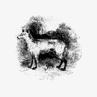 Dessin vintage de renard de montagne
