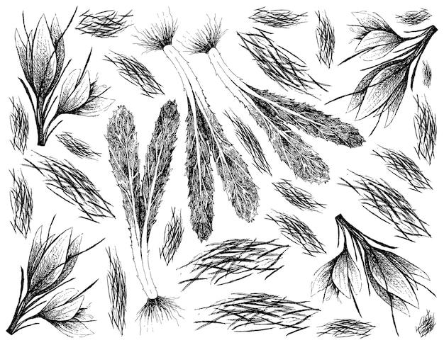 Dessiné à la main de fil de safran et de culantro