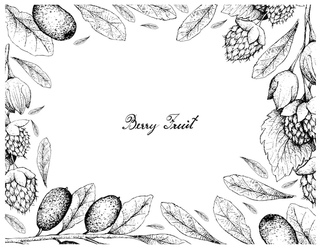Dessiné à la main de framboises de l'himalaya d'or et de fruits elaeagnus ebbingei