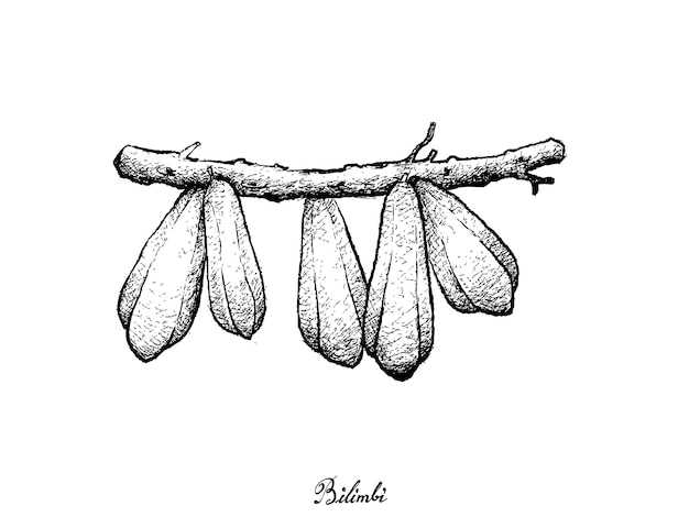 Dessiné à la main de fruits bilimbi