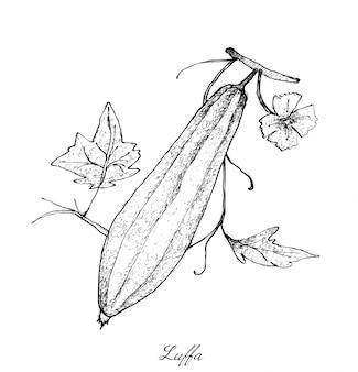 Dessiné à la main de gorud à crêtes fraîches et vertes