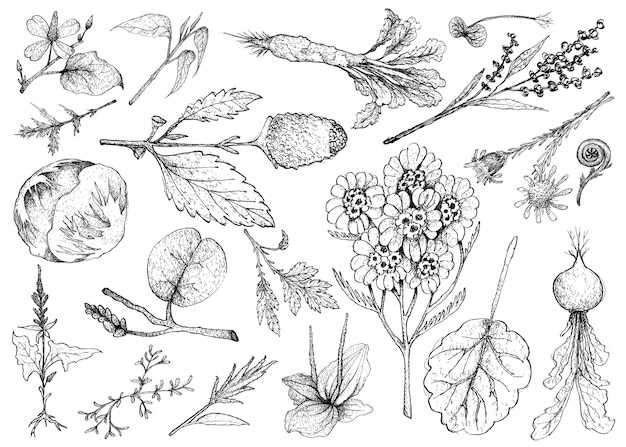 Dessiné à la main de légumes à feuilles et salade
