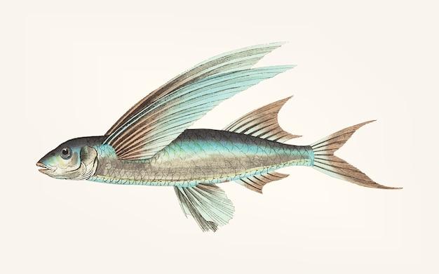 Dessiné de main de poisson volant à nageoires moyennes