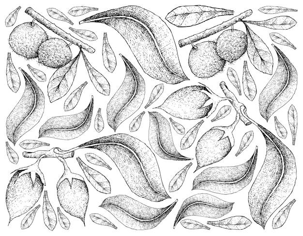 Dessinés à la main aboirana fruitsand asiatique bulletwood fruits