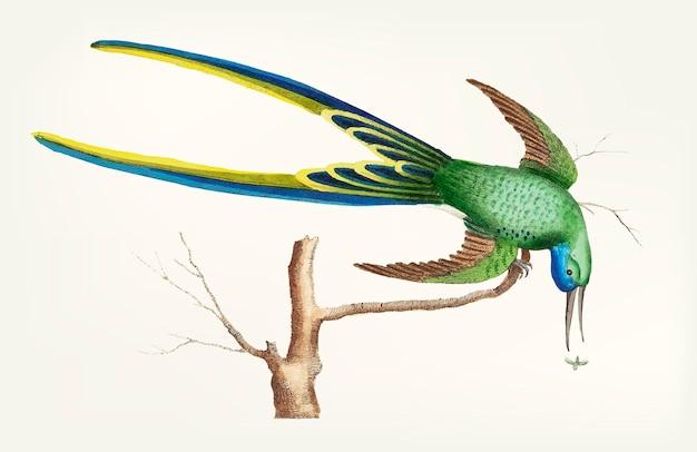 Dessinés à la main de colibri