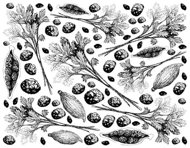 Dessinés à la main de feuilles de coriandre et de gousses de cardamome