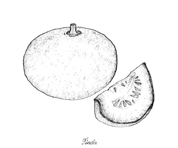 Dessinés à la main de figues fraîches sur fond blanc