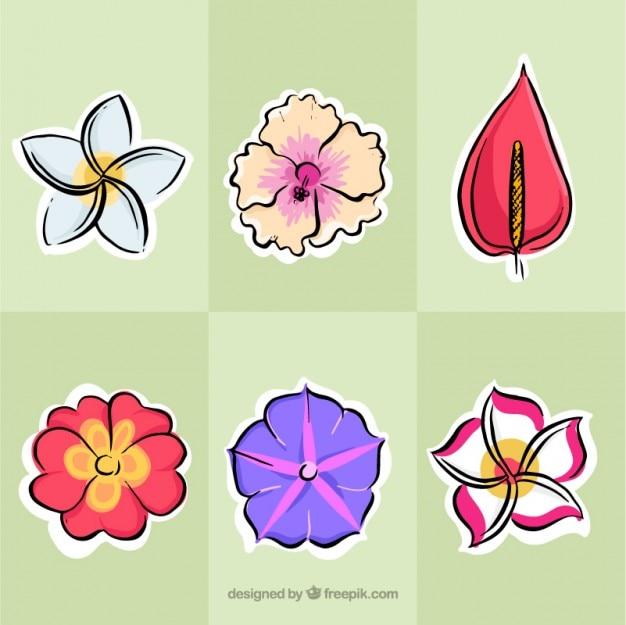 Dessinés à la main des fleurs exotiques