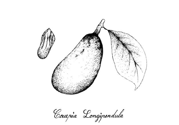 Dessinés à la main de fruits de couepia longipendula sur un bouquet d'arbres