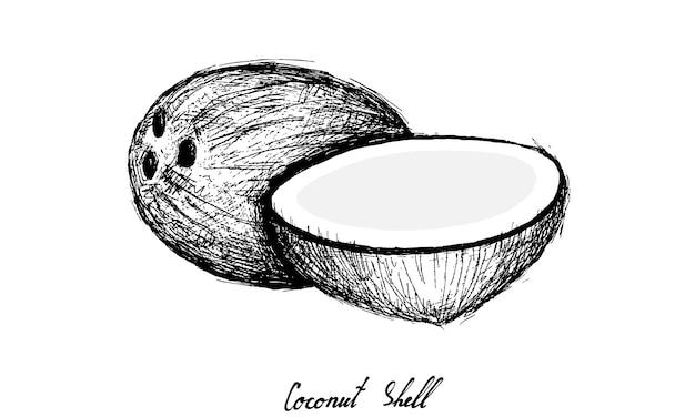 Dessinés à la main de fruits de noix de coco sur fond blanc