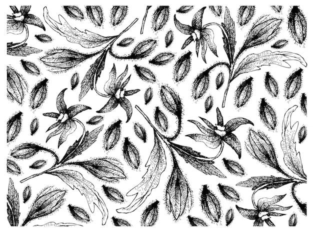 Dessinés à la main de graines de bourrache sur fond blanc