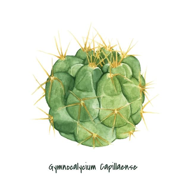 Dessinés à la main gymnocalycium capillaense cactus