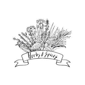 Dessinés à la main des herbes et des épices en bouquet