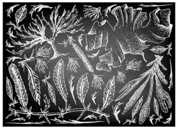 Dessinés à la main de légumes de mer ou d'algues sur tableau noir