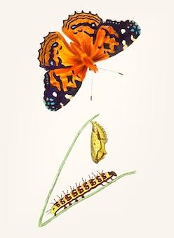 Dessinés à la main de papillon de dame peinte américaine