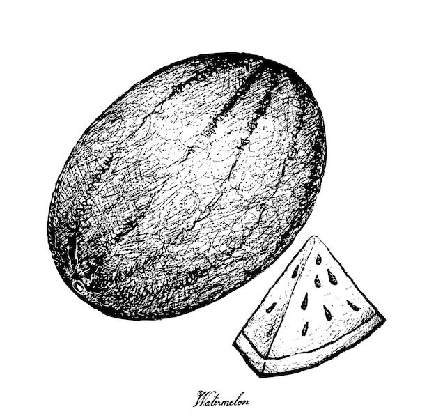 Dessinés à la main de la pastèque fraîche