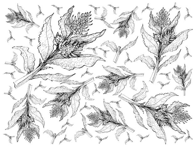 Dessinés à la main des plantes de betteraves marines fraîches