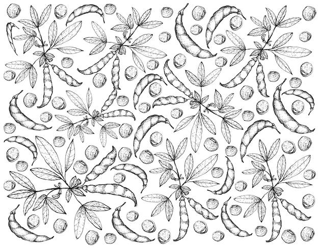 Dessinés à la main de pois pigeon et cajanus cajan plantes fond