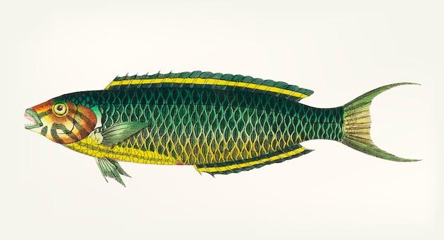 Dessinés à la main de poisson vert-jaune