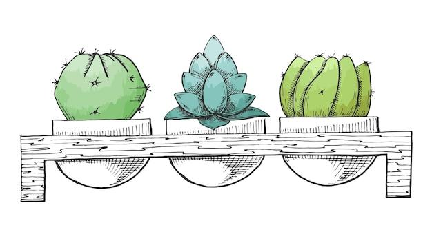 Dessinez trois succulentes dans des pots sur un support en bois. aquarelle stylisée. illustration vectorielle.