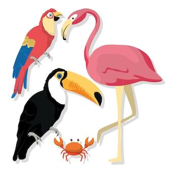 Dessins animés oiseaux exotiques