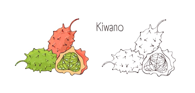 Dessins de contour colorés et monochromes de kiwano mûrs entiers et coupés