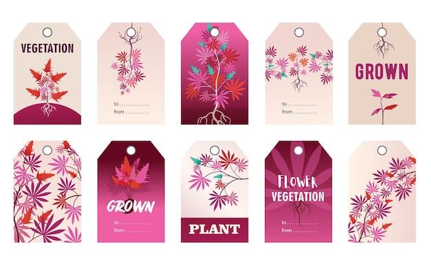 Dessins d'étiquettes roses promotionnelles avec des plantes de chanvre. illustration de bande dessinée