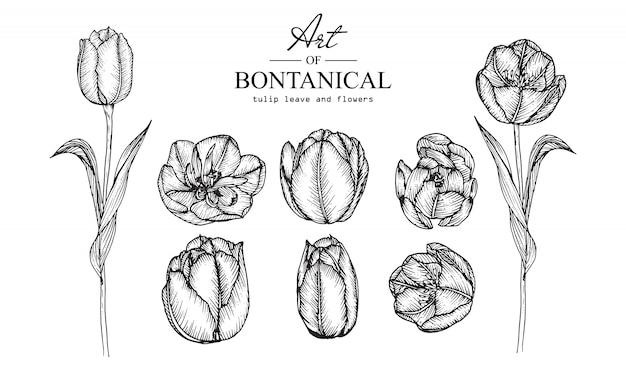 Dessins de feuilles et de fleurs de tulipes. illustrations botaniques dessinés à la main vintage. vecteur.