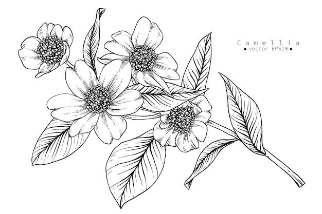 Dessins de fleurs de camélia