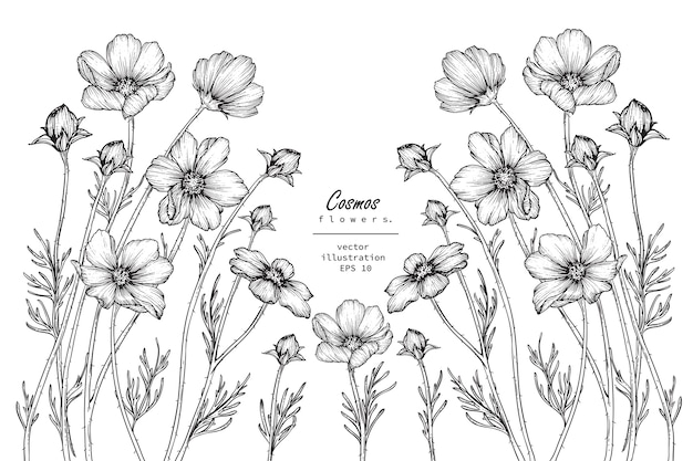 Dessins de fleurs de cosmos