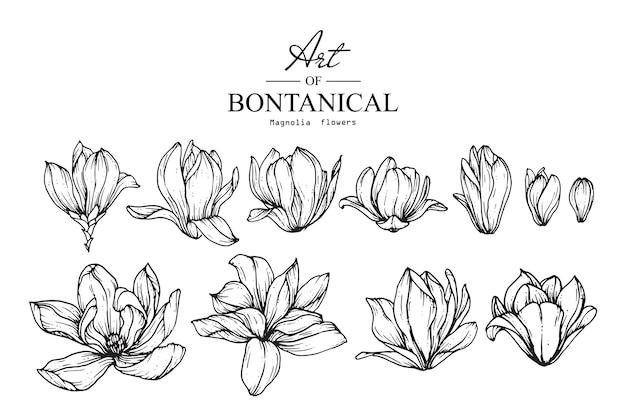 Dessins de fleurs de magnolia. illustrations botaniques dessinés à la main vintage.