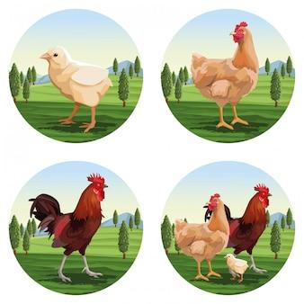 Dessins de poulet et rôtissoire