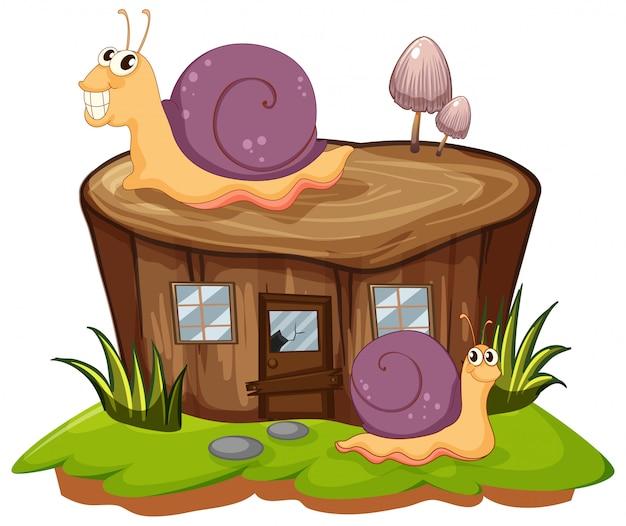 Deux escargots rampant sur la souche