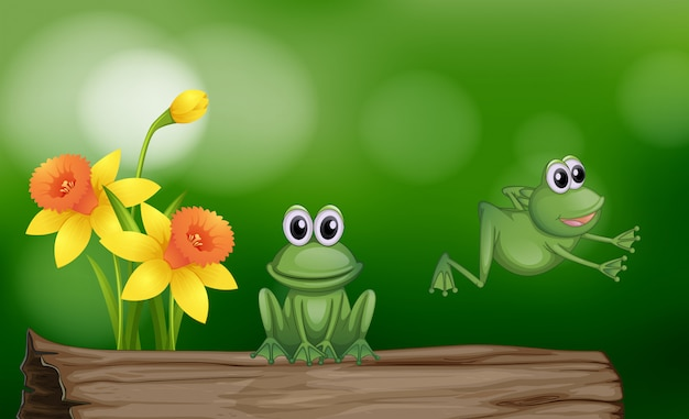 Deux grenouilles vertes sur la bûche