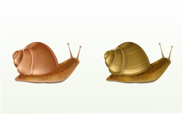 Deux icônes vectorielles 3d d'escargots bourgogne ou romains rampants isolés sur fond blanc