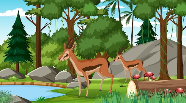 Deux impala en forêt à scène de jour avec de nombreux arbres