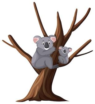Deux koalas mignons sur l'arbre sur blanc