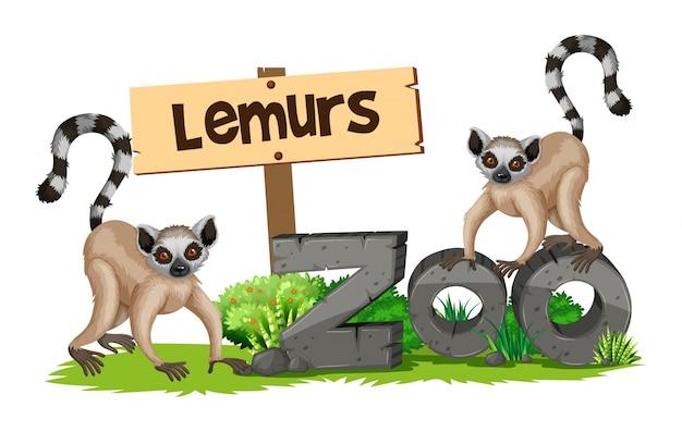 Deux lémuriens dans le zoo
