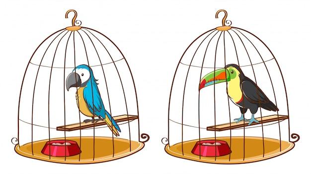 Deux oiseaux dans des cages à oiseaux