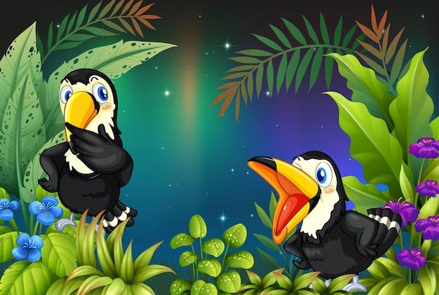 Deux oiseaux à la forêt tropicale