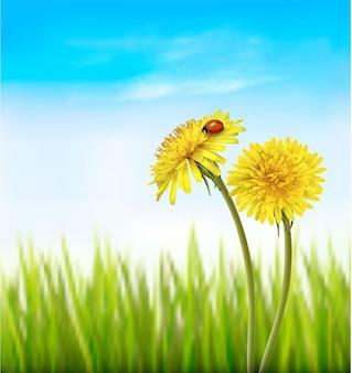Deux pissenlits jaunes avec une coccinelle sur un fond de printemps nature.