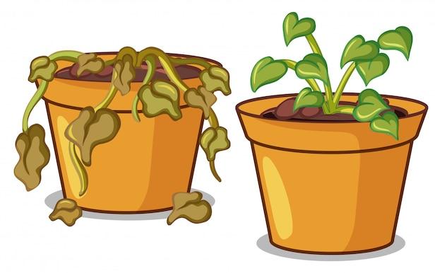 Deux plantes en pot sur blanc