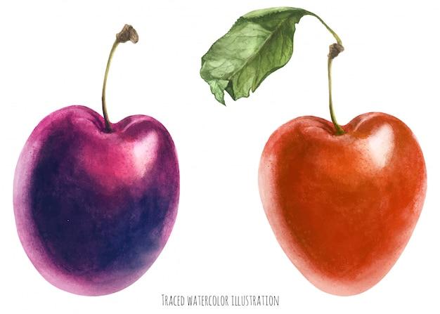 Deux prunes fraîches
