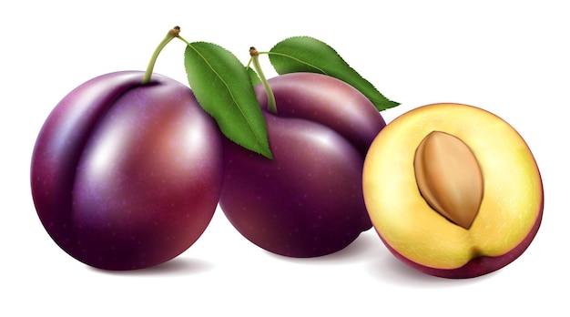 Deux prunes mûres entières avec moitié avec pierre et feuilles isolées sur fond blanc. illustration vectorielle réaliste 3d.