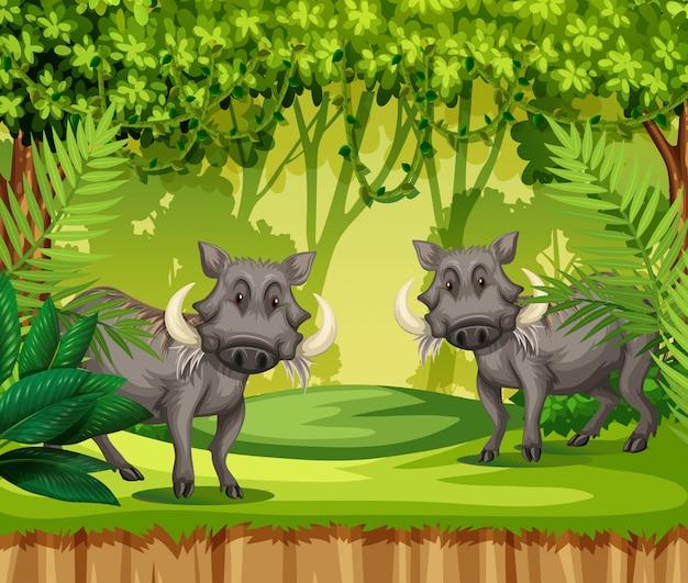 Deux sangliers dans la jungle