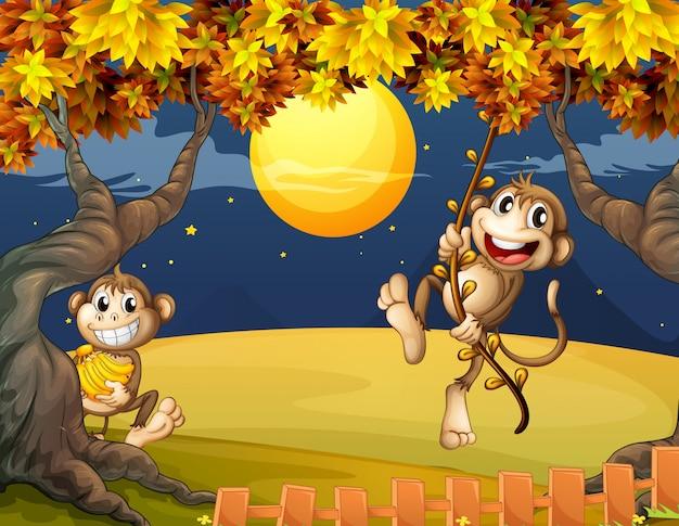 Deux singes se demandant au milieu de la nuit