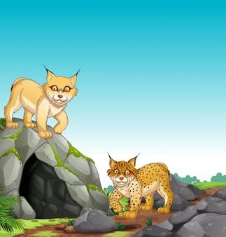 Deux tigres vivant dans la grotte