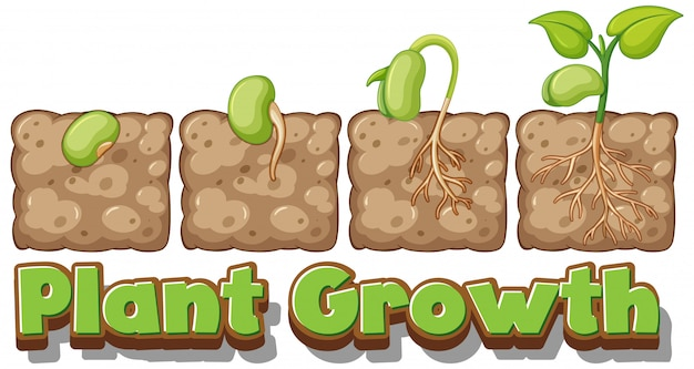 Diagramme montrant comment les plantes poussent à partir de graines